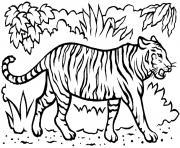 magnifique tigre avec dents dans la savane dessin à colorier