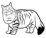 Silhouette en tonneau et des poils mi longs le chat siberian est originaire de la russie dessin à colorier