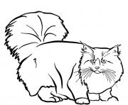 le chat norvegien aussi appele chat des forets norvegiennes ou norsk skogkatt, est une race de chat a poil mi long originaire de Norvege dessin à colorier