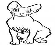 sphynx est un chat originaire du Canada et ne possede quasiment aucune fourrure dessin à colorier