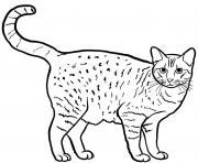Ocicat est un chat originaire des Etats Unis et est caracterise par une couleur fauve tachetee dessin à colorier