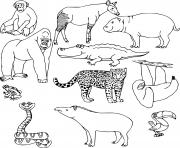 Coloriage les animaux sauvages