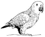 perroquet gros oiseau qui se nourrissent de fruits et de graines dessin à colorier