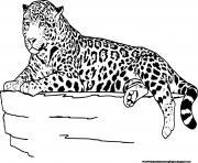jaguar aime grimper dans les arbres dessin à colorier