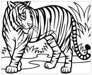 tigre felin vit dans la foret asie aux yeux bleus dessin à colorier