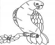 perroquets avec des plumes de differentes couleurs dessin à colorier