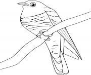 Coloriage toucan oiseau dessin