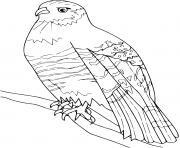 Coloriage vautour dessin