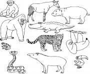 animaux sauvages dans la jungle en nature dessin à colorier