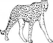 guepard felins de la jungle dessin à colorier