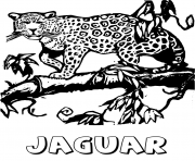 Coloriage le grand felin jaguar