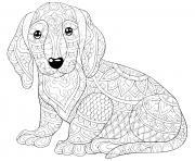 chien teckel saucisse allemand dessin à colorier