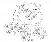 bulldog anglais compagnon doux et gentil dessin à colorier