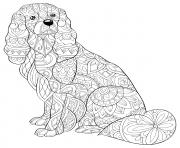 Coloriage chien teckel saucisse zentangle pour adulte antistress