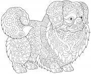 petit brabancon chien a poil court bruxellois dessin à colorier