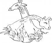 deux tetes de girafes dessin à colorier