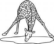 girafe qui boit de l eau dessin à colorier