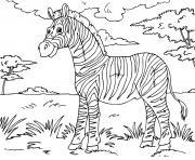 zebre un mammifere herbivore ressemblant au cheval dessin à colorier