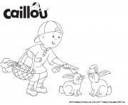 caillou le grand garcon donne des carrotes aux lapins dessin à colorier