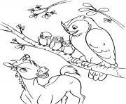 bebe spirit et son ami hibou dessin à colorier