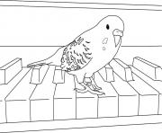 perroquet sur un piano dessin à colorier