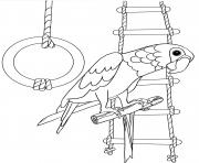 perroquet aime jouer dessin à colorier