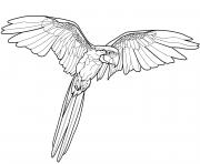 perroquet oiseau exotique dessin à colorier