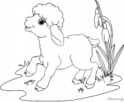 mouton agneau adorable kawaii facile dessin à colorier