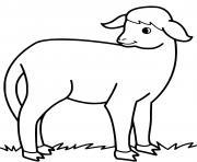 petit agneau mange de lherbe dessin à colorier