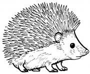 herisson realiste animal de compagnie dessin à colorier