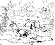 famille de loups dans un zoo parc animaux dessin à colorier