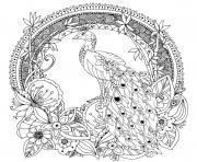 paon oiseau galliforme dessin à colorier