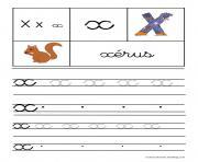 lettre X pour Xerus ecriture cursive gs dessin à colorier