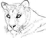 puma animal realiste dessin à colorier