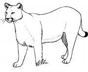 puma concolor grand chat nord et sud amerique dessin à colorier