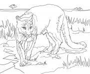 cougar du lamerique du sud dessin à colorier