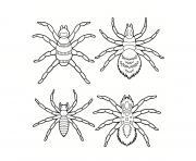 plusieurs araignees differentes dessin à colorier