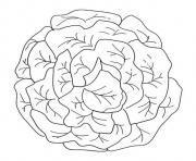 salade laitue verte dessin à colorier