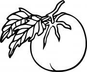 Nature Legumes Tomate dessin à colorier