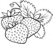 champs de fraises fruits dessin à colorier