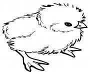 bebe poussin dessin à colorier