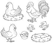 poule coq poussins dessin à colorier