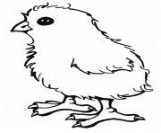 poussin facile poule dessin à colorier
