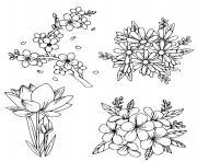 fleurs de printemps vivaces dessin à colorier