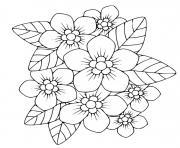 phlox plante herbacee vivace dessin à colorier