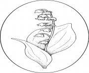 Coloriage fleurs de muguet brin 1er mai dessin