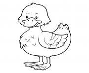 canard colvert dessin à colorier
