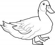 canard realiste dessin à colorier