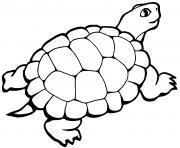 Coloriage tortue facile maternelle dessin