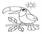 Coloriage oiseau toucan toco dessin